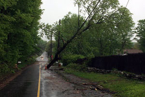 Downed tree and wires