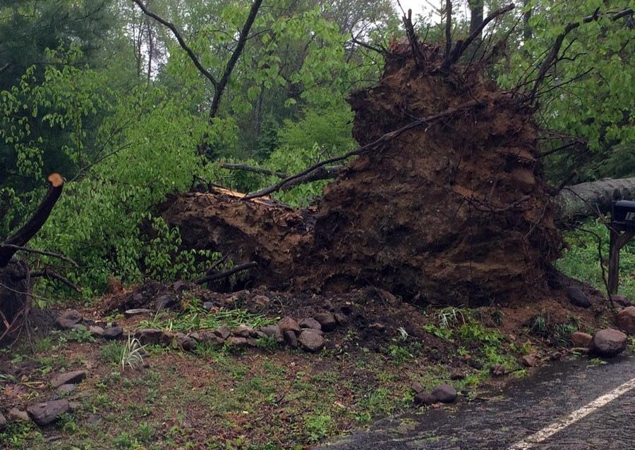 Tree damaged by May 2018 tornado